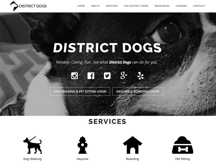district dogs